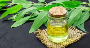 nail fungus treatment with eucalyptus oil