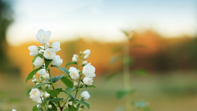 jasmine nail fungus treatment