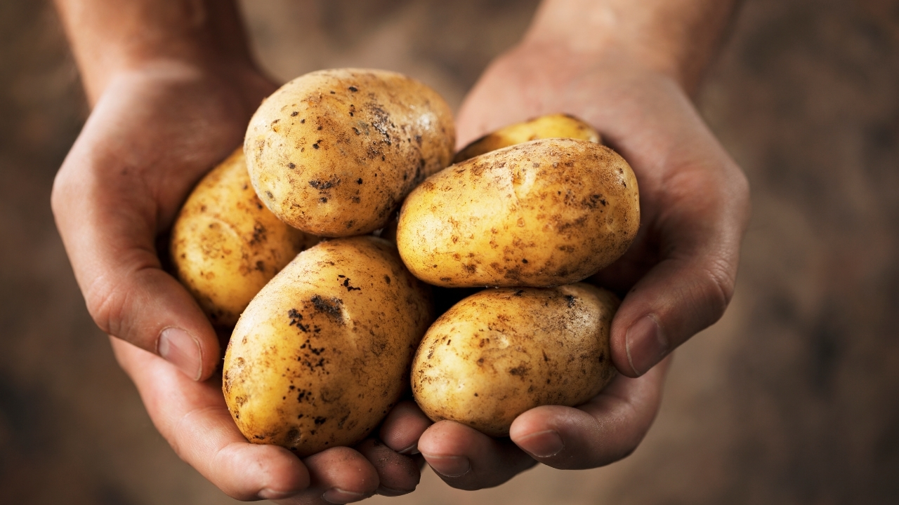 Potatoes fungal infection treatment