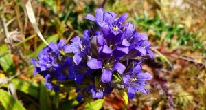 treating nail fungus with Gentian Violet