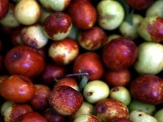 Jujube Fruits fungal infection treatment