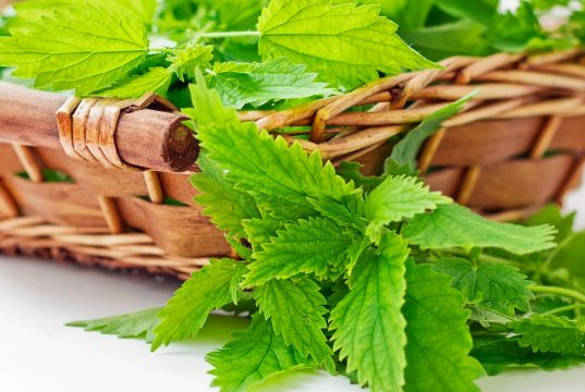 Nettle Leaves for fungal infections